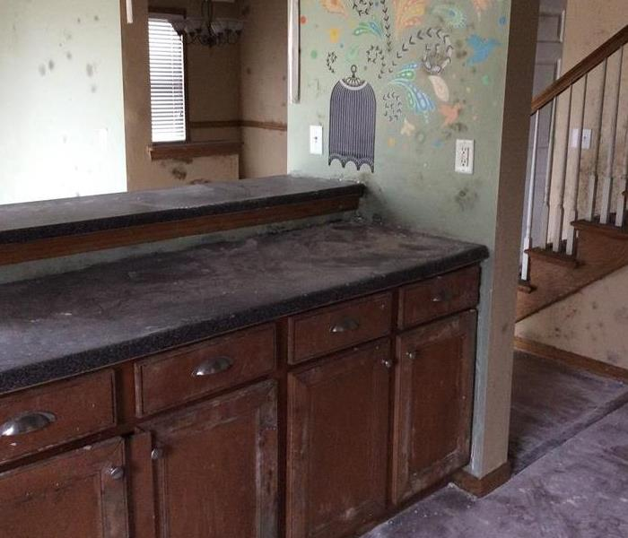 Mold remediation: my house has mold